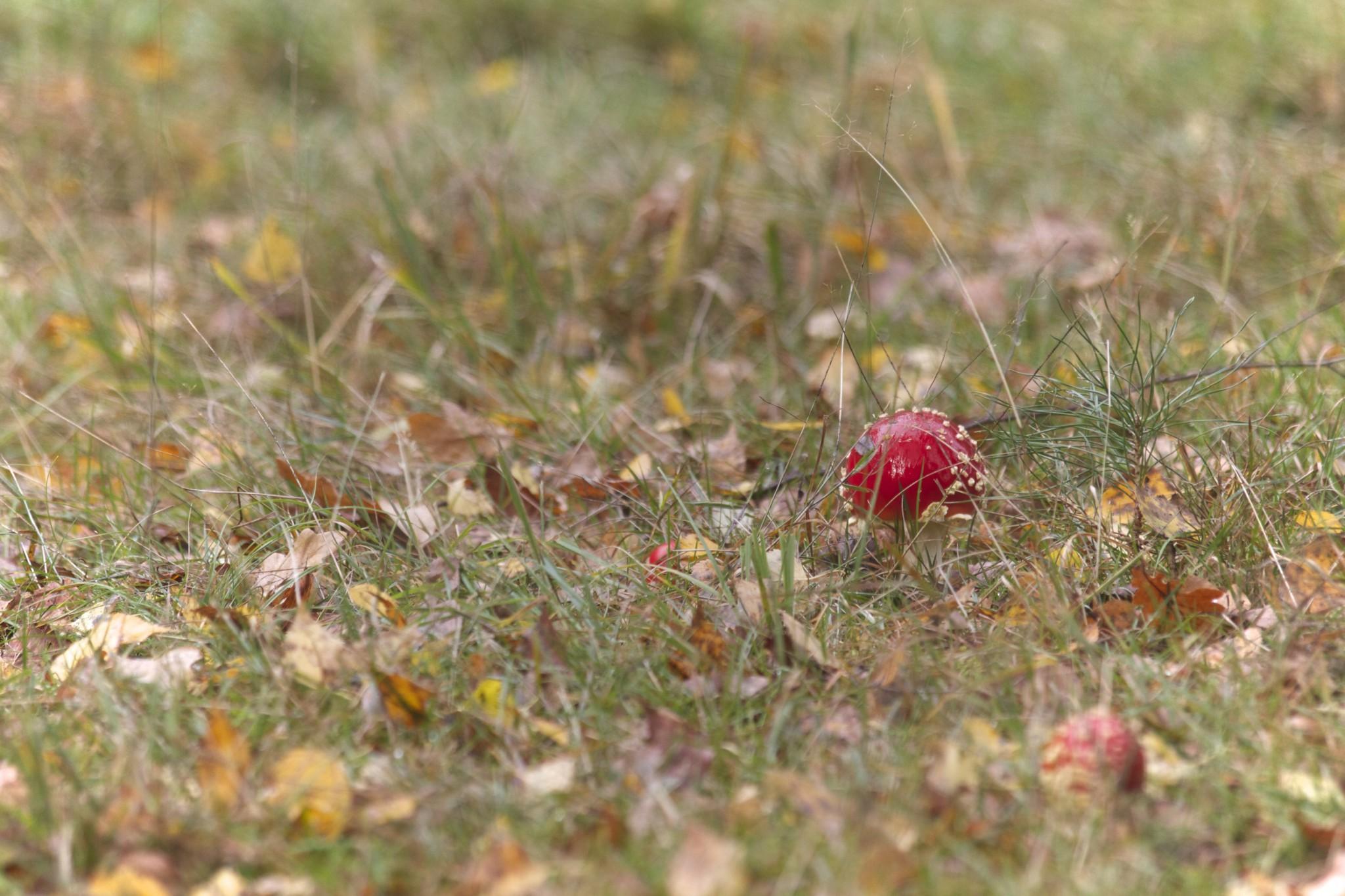 Taking wonderful nature closeups using a telephoto lens
