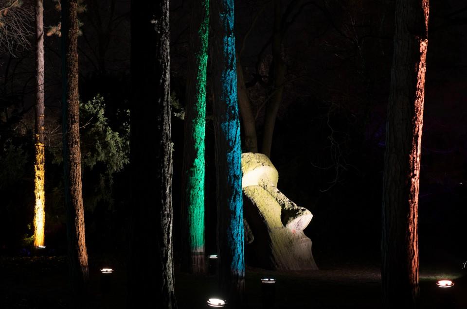 Catching lights at night