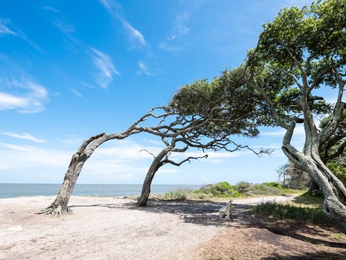 Jekyll Island & Driftwood Beach