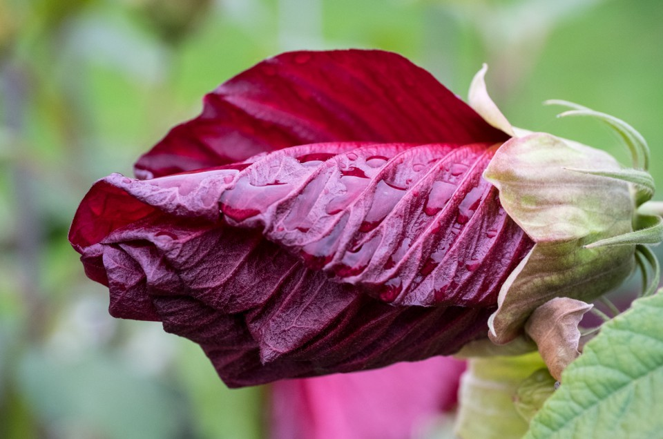 Macro Photography with the Fuji X-Series: Impressions of the Zeiss Touit 50mm Macro lens